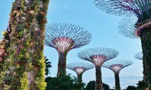Gardens by the Bay, visita a los jardines de Singapur