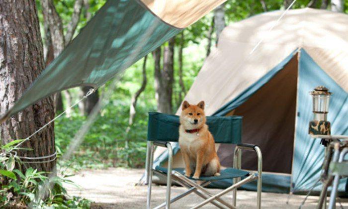 dormir en un camping