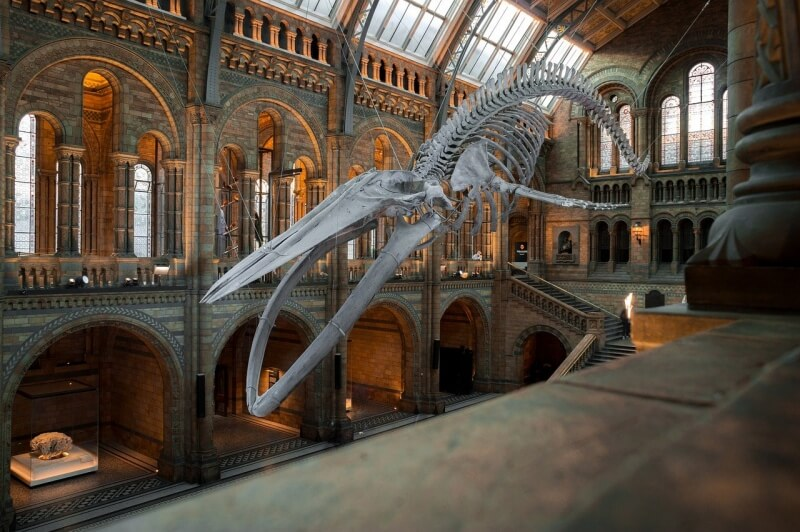 National history museum londres